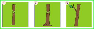 kunci jawaban tematik kelas 6 tema 1 subtema 3 pembelajaran 3