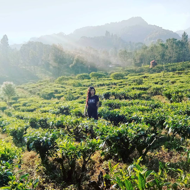 Tiket Masuk Dan Lokasi Agrowisata Gunung Mas Puncak Cisarua
