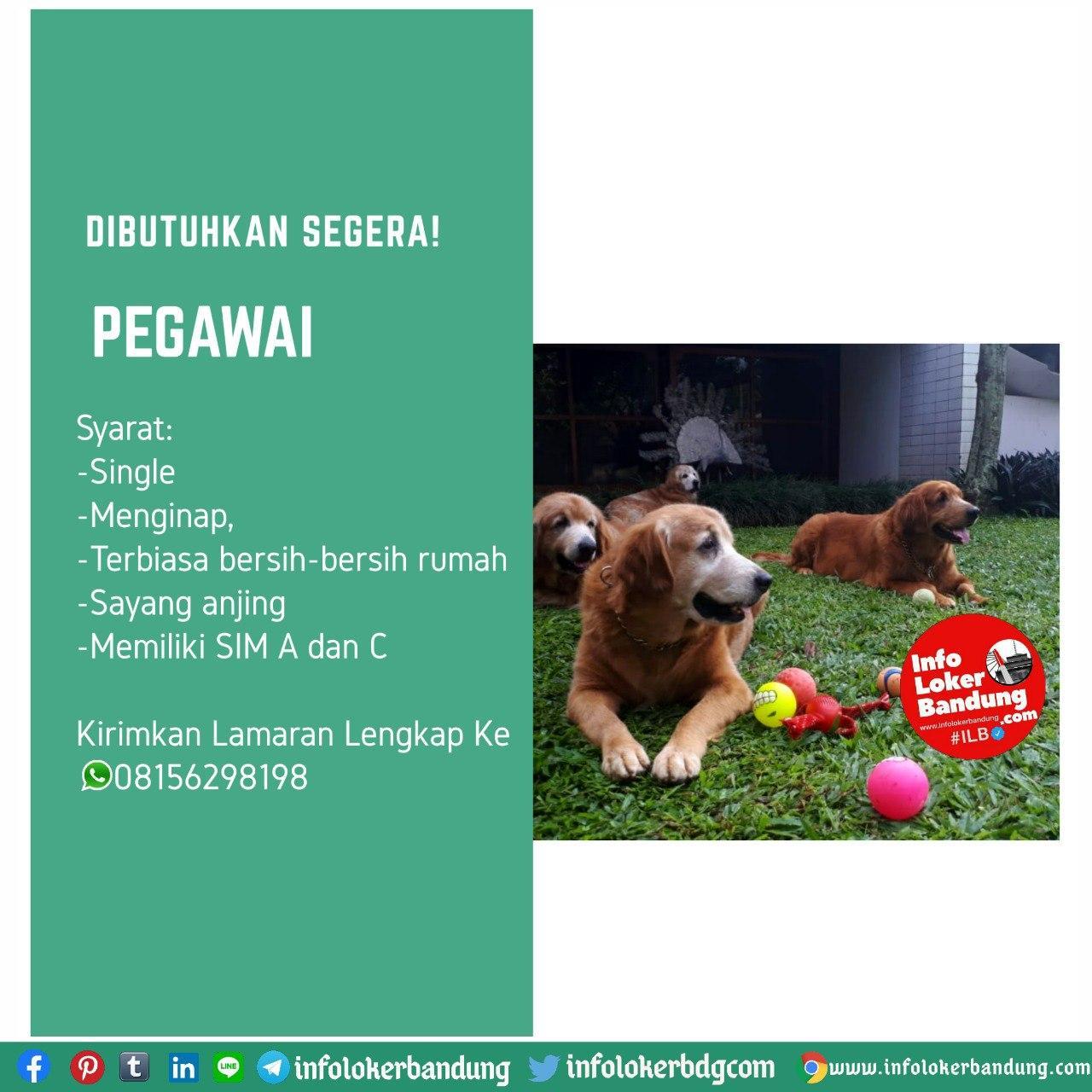Dibutuhkan Segera Pegawai di Bandung Juli 2020