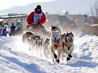 cães no gelo