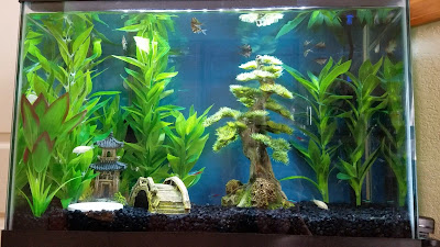 20-gallon beginner fish tank with natural looking fake plants