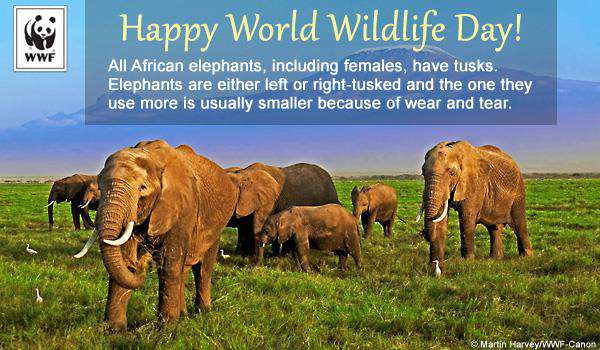 World Wildlife Day Wishes Lovely Pics