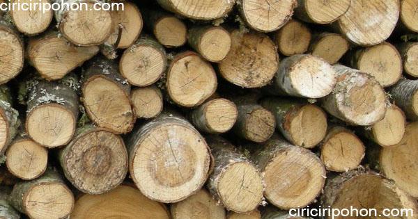 ciri ciri pohon kayu waru