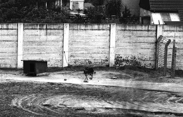 Anjing Penjaga Tembok Berlin