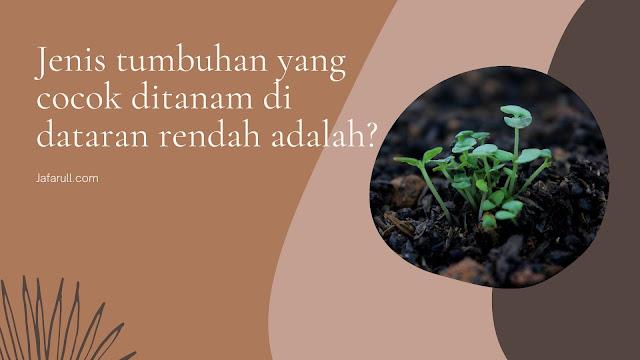 Jenis tumbuhan yang cocok ditanam di dataran rendah adalah?