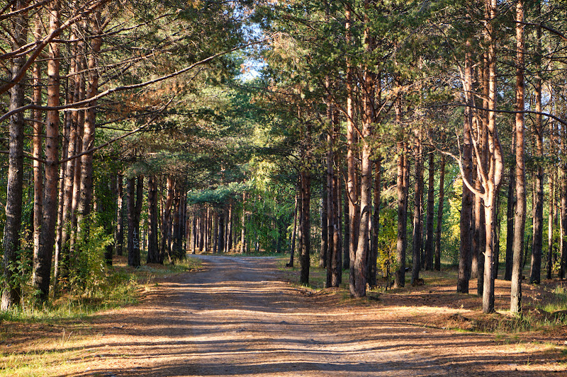 Дорога на Камбалицу