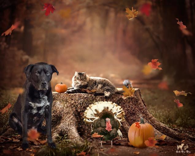 Thanksgiving 2020 (©Jenny Bell @ Bell Fur Zoo)