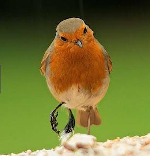 Manpaat Dan Harga Obat Bubul Pada Kaki Burung Terbaru Saat Ini Terlengkap