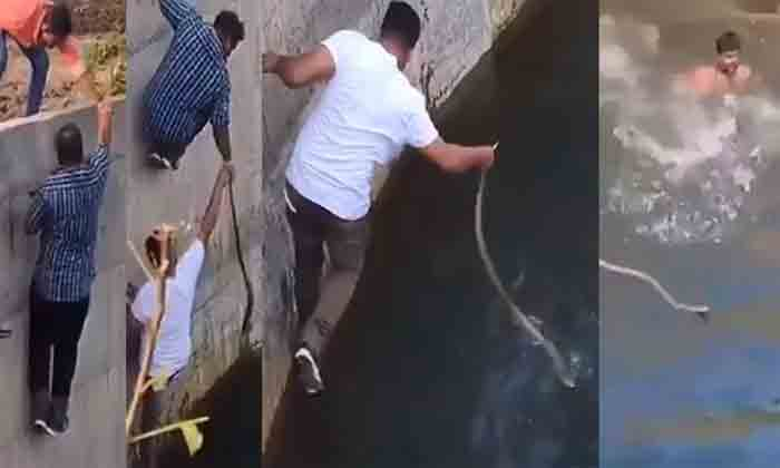 Watch: Group of men rescues cobra after one of them jumped into a well to save the snake, New Delhi, News, Social Media, Video, Youth, Snake, National