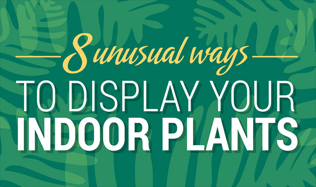 8 Extraordinary ways of displaying indoor plants #infographic