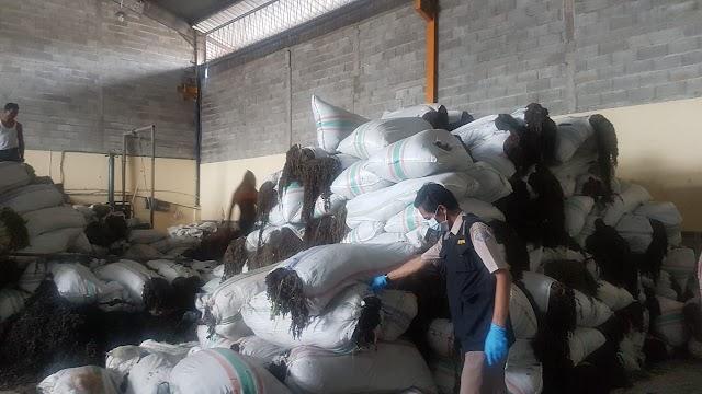 Jangkau Pasar Dunia, Ekspor Rumput Laut Asal Batam Capai 1.149,92 Ton