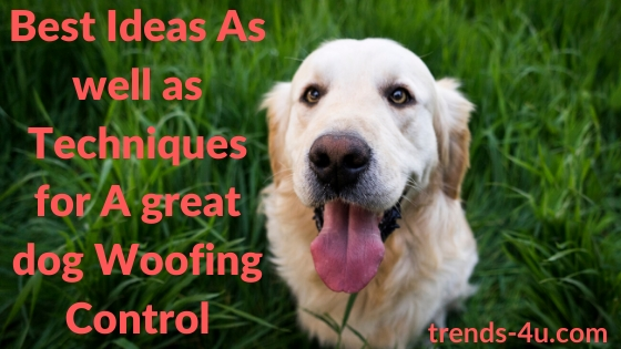 Best Ideas As well as Techniques for A great dog Woofing Control