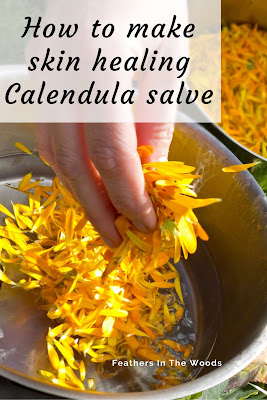 Calendula petals for skin salves
