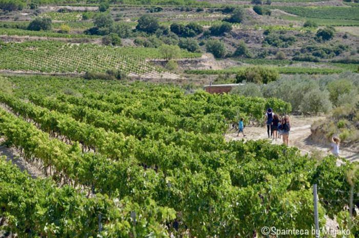 Abalos Spain 北スペイン・ワイン産地リオハのぶどう畑と散歩する人たち