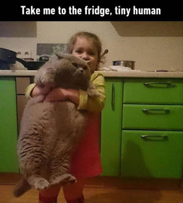 take me to the fridge cat, giant cat and little girl, cat pictures, cat meme, cat humor