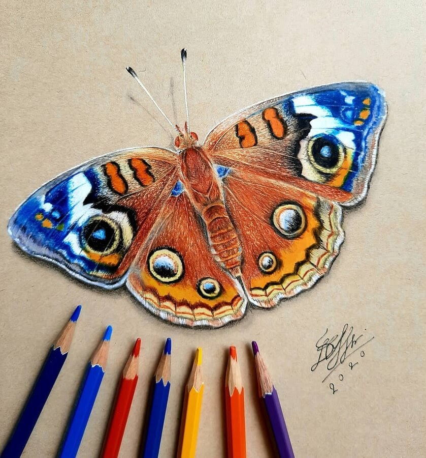 10-Colorful-moth-Bele-www-designstack-co
