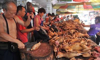 Maltrato Animal.Carniceria de Perros en China.