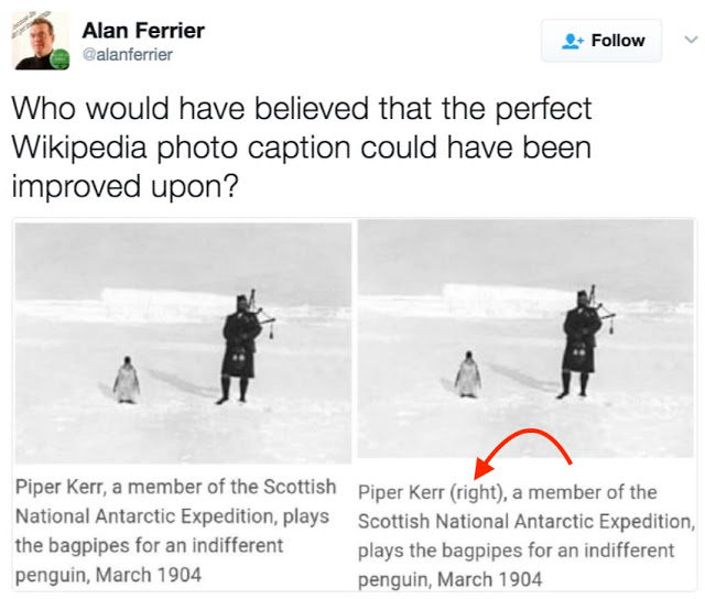 Tweet by Alan Ferrier. Improved caption of Wikipedia photo. Piper Kerr plays the bagpipes for an indifferent penguin 1904. Indifferent Penguin and other stories of penguins. marchmatron.com
