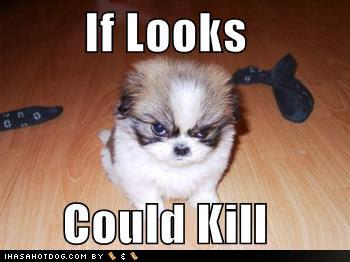 http://1.bp.blogspot.com/-IY_aGkO4X38/TmZ_j1vV_wI/AAAAAAAAFYQ/hPR0DbtDaFQ/s400/really+funny+dogs-5.jpg