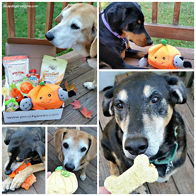 dogs with Halloween toys and treats