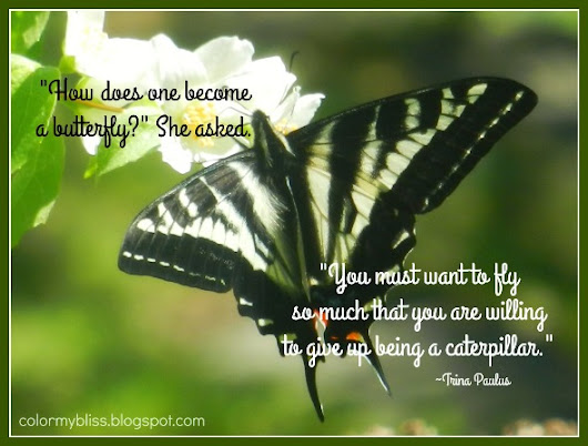 Colorful Quotes: A Quote By Trina Paulus About Becoming a Butterfly