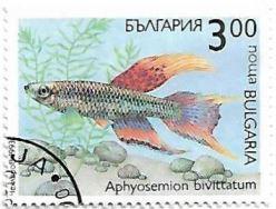 Selo Peixe ornamental Aphyosemion bivittatum