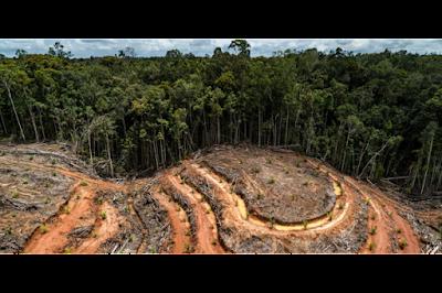 Penggundulan Hutan Papua Diungkapkan Greenpeace