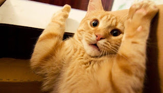 gambar kocak kucing lucu - kanalmu