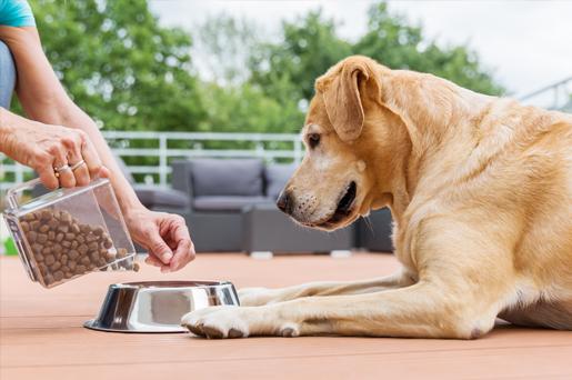 Jak przechowywać karmy dla psów i kotów?