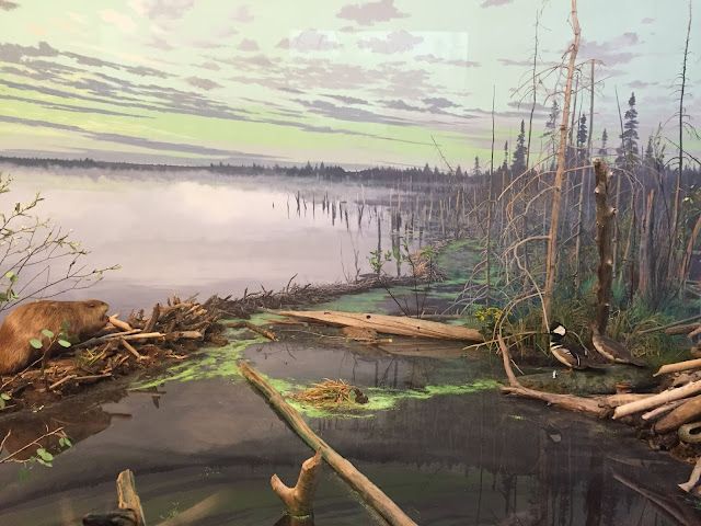 Beaver Pond display at the Milwaukee Public Museum