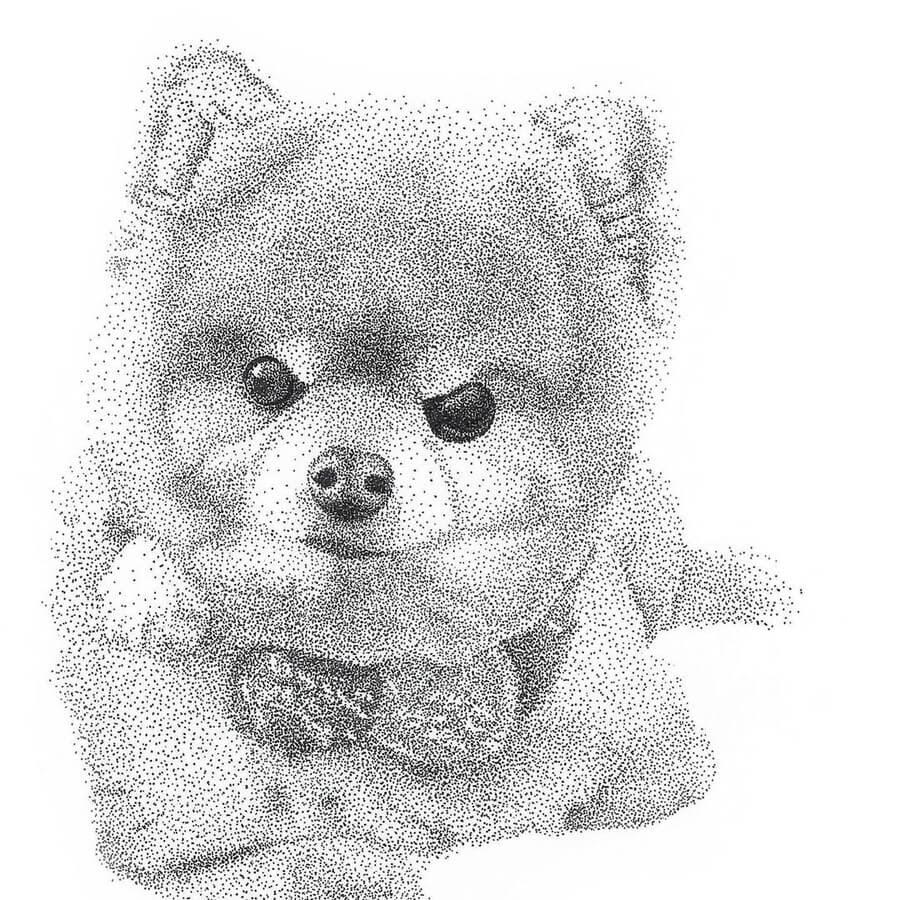 08-The-cute-Pomeranian-Kelsey-Hammerton-www-designstack-co