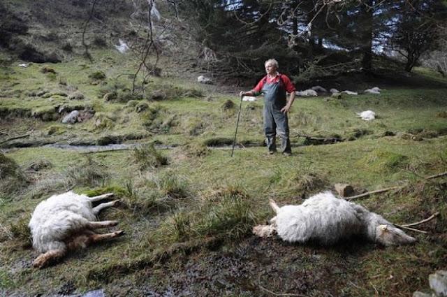 Θεσπρωτία: Θα περισυλλέγονται τα νεκρά ζώα στη Θεσπρωτία