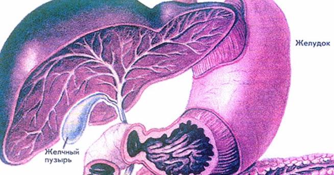 Цирроз печени симптомы и лечение