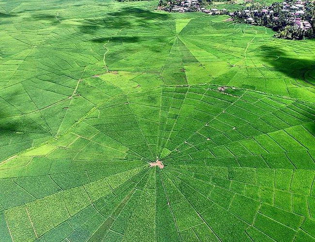 Xvlor Cancar spider rice field is tribal land distribution system in Cancar Village