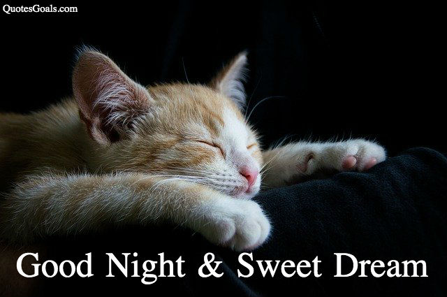 Animal Good Night photo