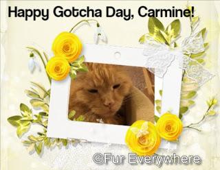 Carmine's Gotcha Day