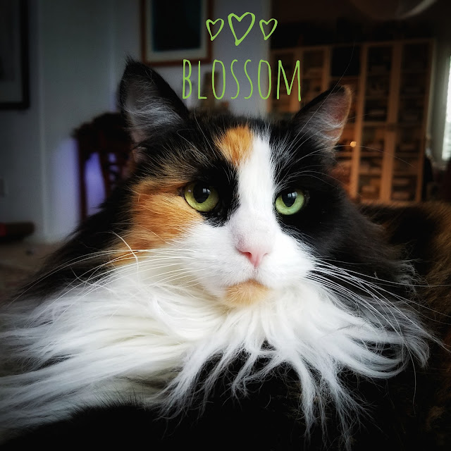 Blossom the Beautiful - my calico cat