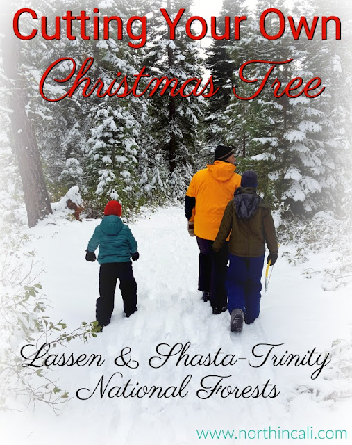 Christmas Tree Cutting in Lassen & Shasta-Trinity National Forests  www.northincali.com