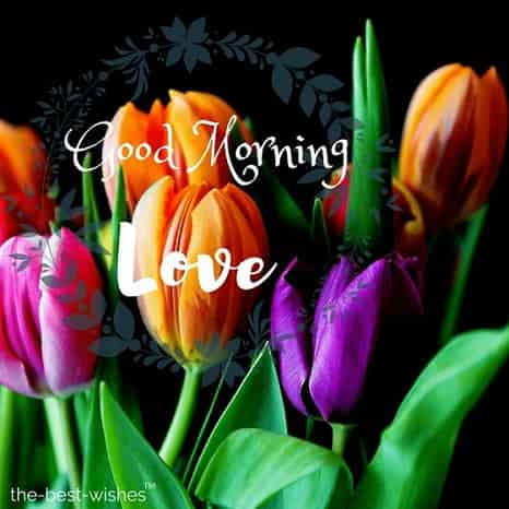 morning wishes images with flowers tulips bouquet