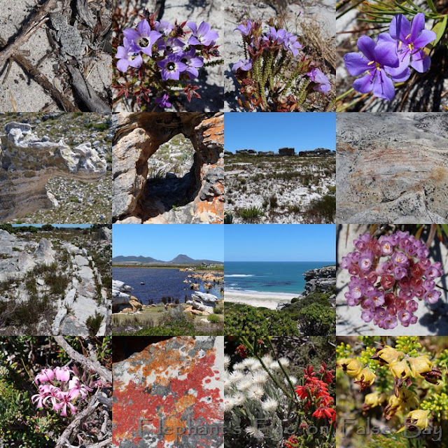 New Year's Day flowers at Cape Point