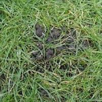 regenwormen in het gras