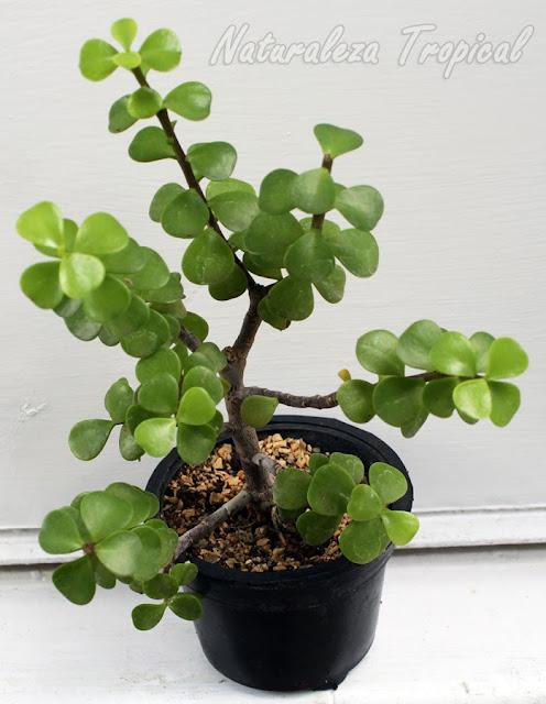 en la actualidad las macetas que podemos utilizar para sembrar nuestras plantas son elaboradas con numerosos materiales uno de los materiales ms