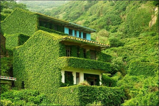 vila de casas tomada pela vegetação verde