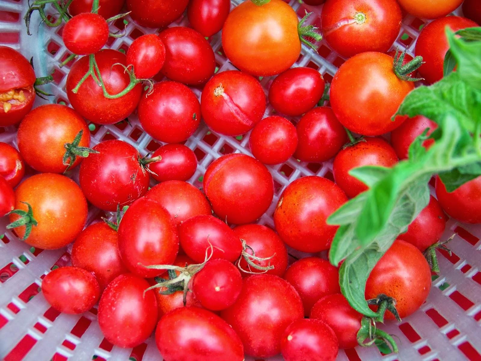 Husky Hybrid Red Tomato Cherry