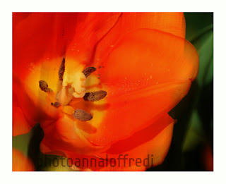 fotografia fiore