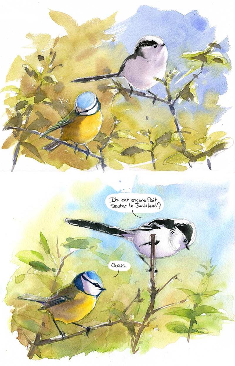 mésange bleue et mésange à longue queue, défendre la ZAD