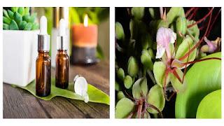 obat tradisional dari kayu merbau