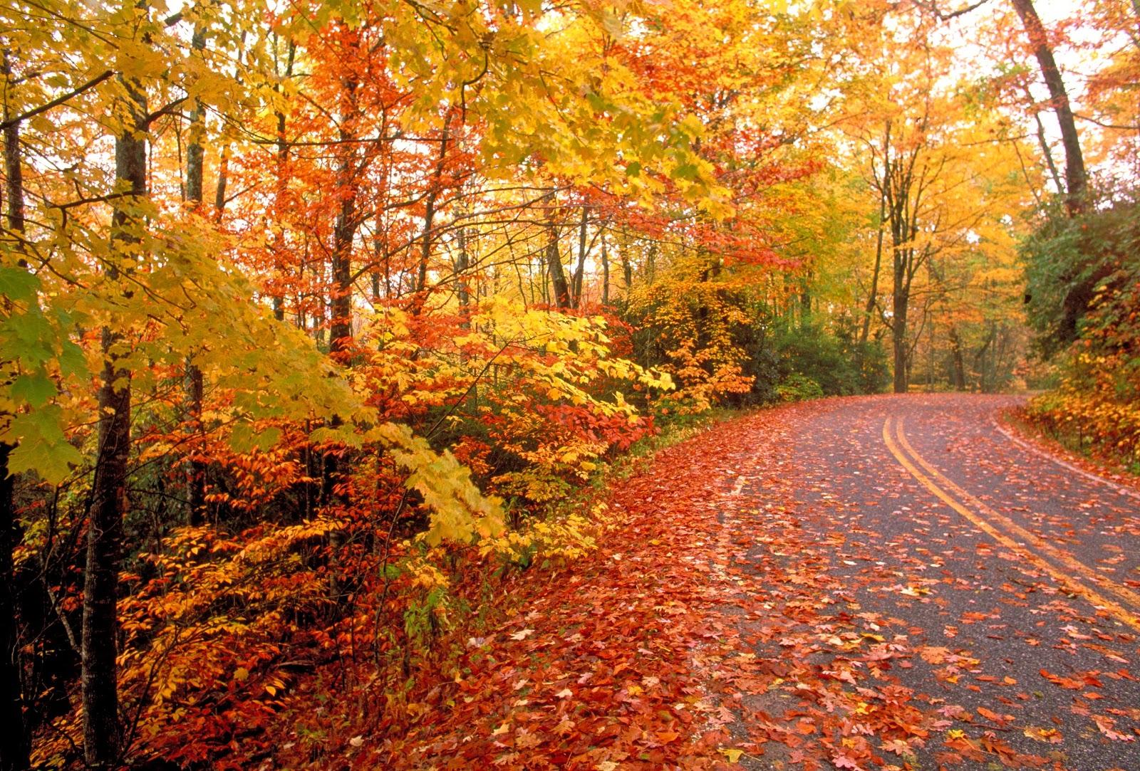 Simple Wallpapers Colors Fall Autumn Season Wallpapers Wallpapers Screensavers