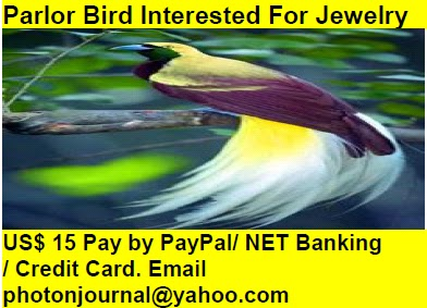 Parlor Bird Interested For Jewelry bird story book
