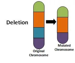 Deletion mutation